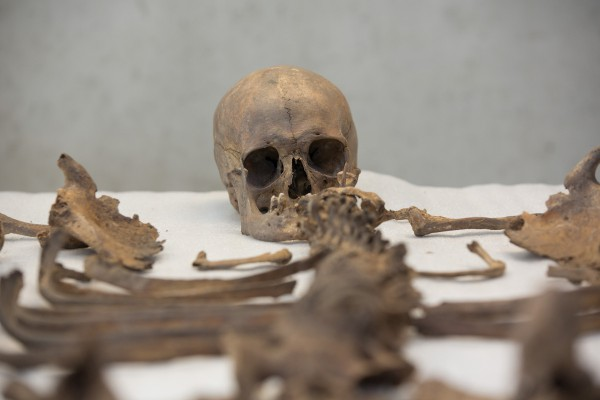 Nadat de vrijwilligers het botmateriaal proper hebben gemaakt, wordt het skelet klaargelegd voor verder onderzoek © Geert Vyverman