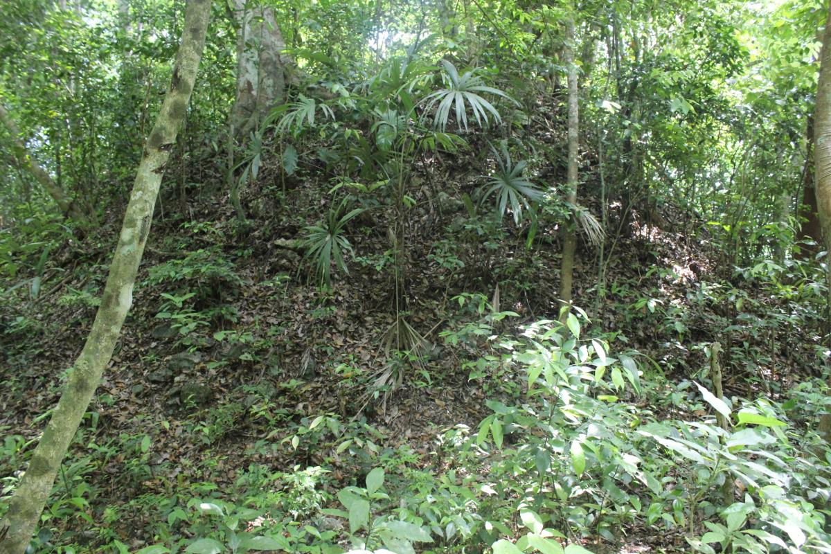 De meest tot de verbeelding sprekende ruïnes zijn wellicht de bekende piramides. De jungle heeft deze gebouwen echter helemaal overwoekerd © Maya Research Program