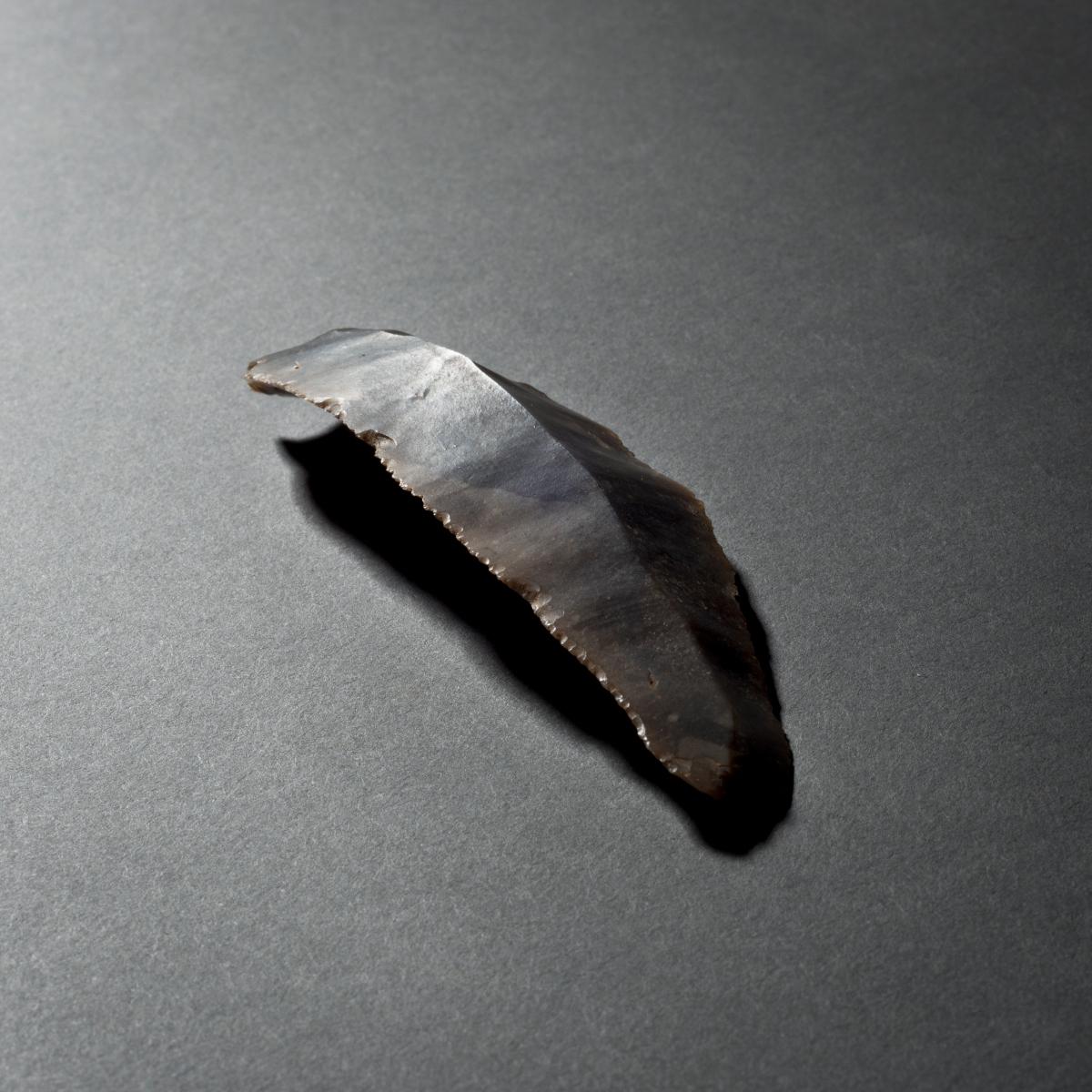 Het resultaat van het zeefproject mag gezien worden. Eén van de pronkstukken is een zogenaamde microdenticulé.