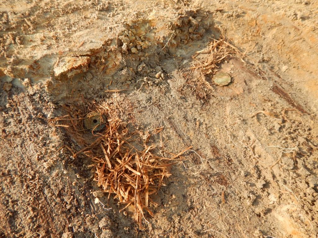 De bodem van deze schuilplaats was bedekt met stro. Een soldaat verloor er enkele munten ©  Monument Vandekerckhove