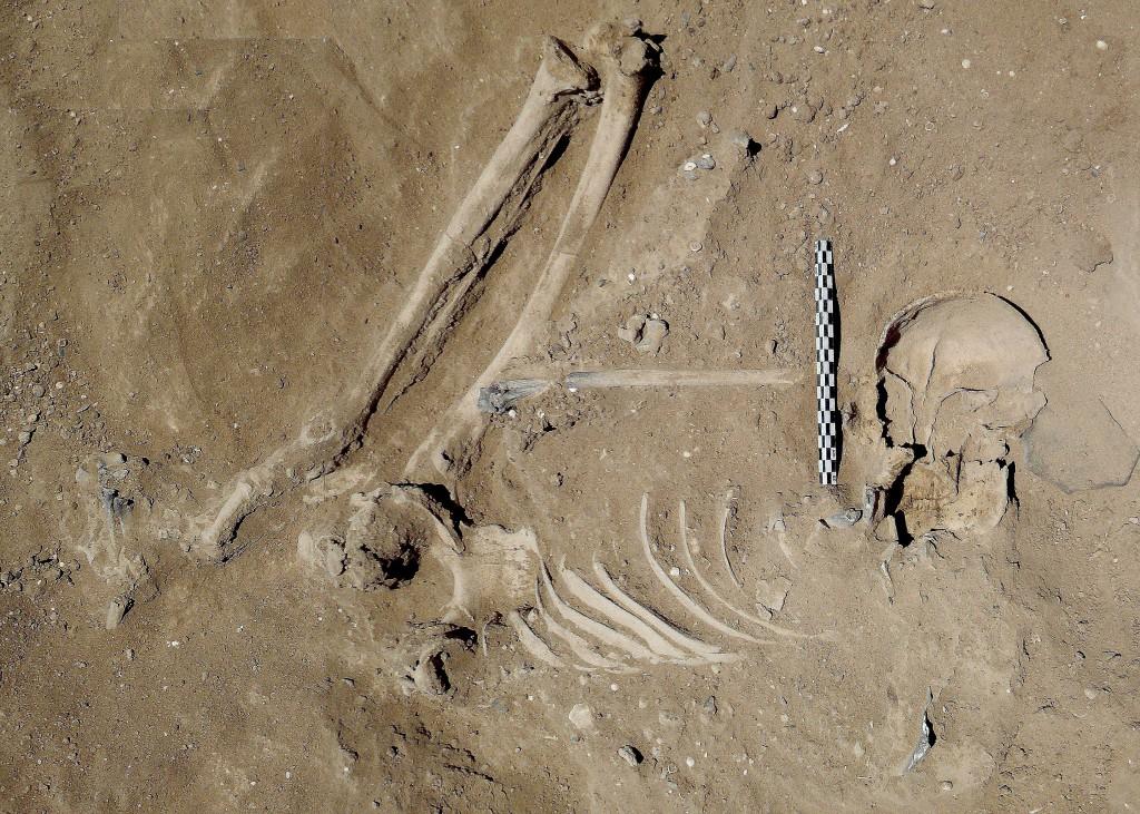 Skelet van een man met verwondingen aan de schedel en nek, die afkomstig zijn van pijlen en een stomp voorwerp © University of Cambridge
